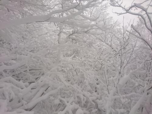 米山3.jpg