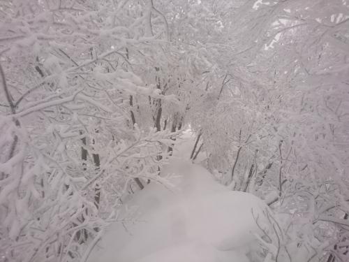 米山6.jpg